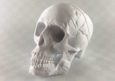 Human Skull by MakerBot